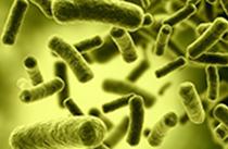 control plagas Barcelona tratamientos