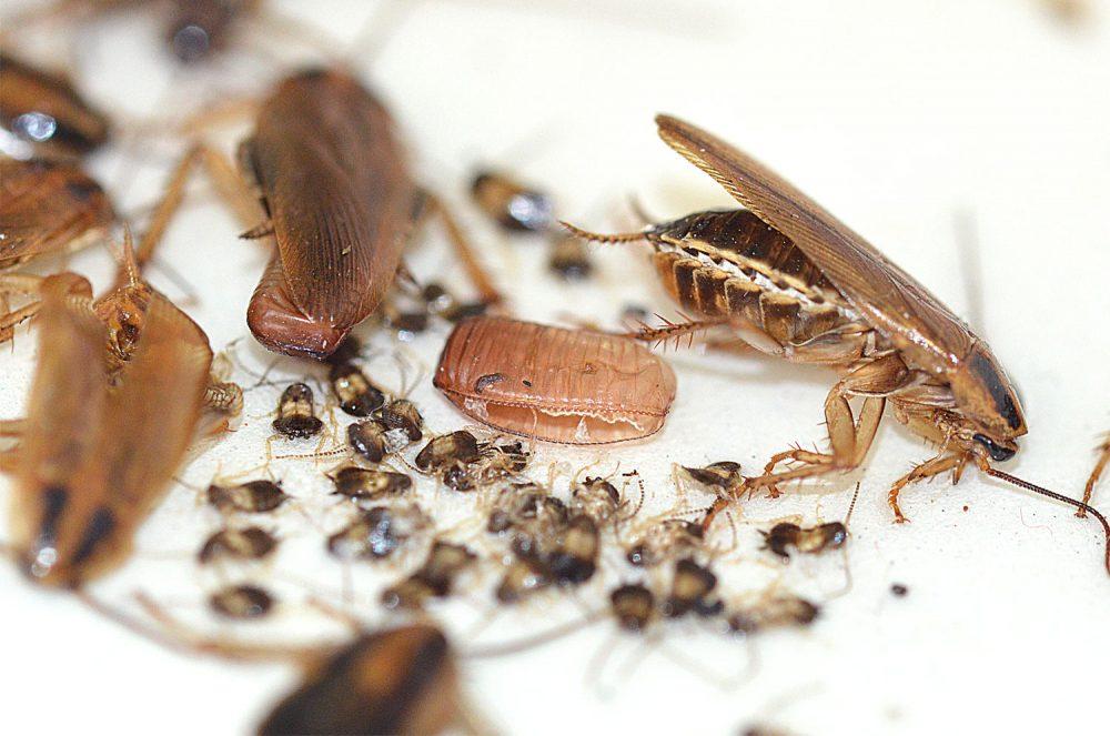 Anecpla advierte de los peligros de las plagas habituales de verano