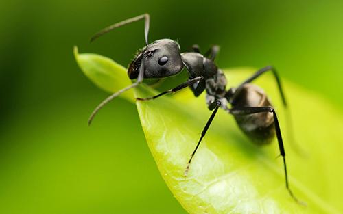 Medidas preventivas contra las hormigas