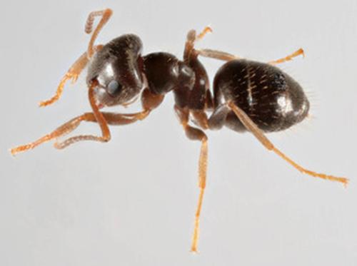 Desarrollo y reproducción de las hormigas