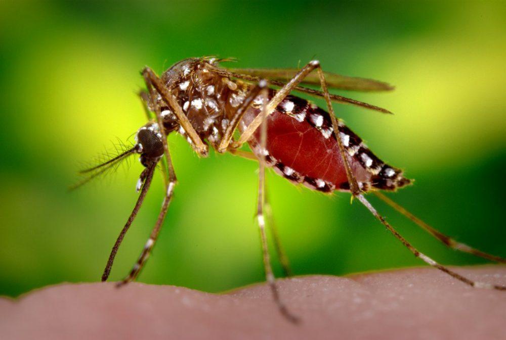 La lluvia genera la proliferación de nuevas plagas de mosquitos tigre