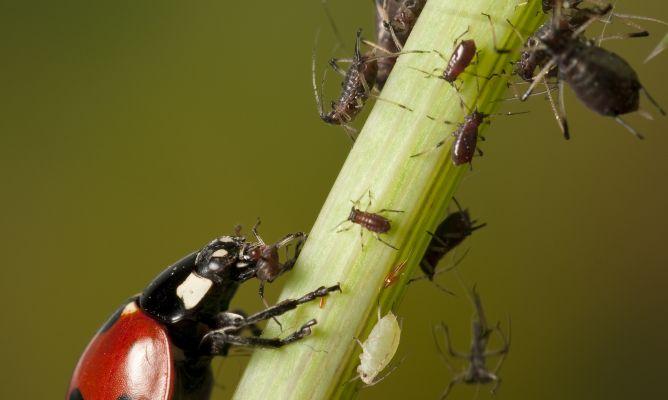Nuevas plagas de insectos llegan a España por el cambio climático y la globalización