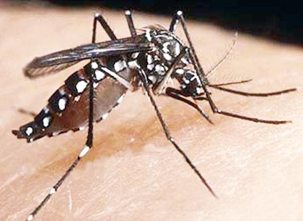 La OMS solo recibe un 13% de financiación para luchar contra el zika