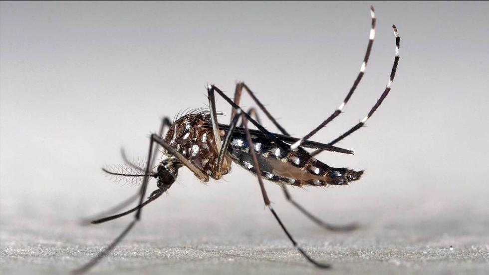 La primavera aumenta el riesgo de transmisión del virus del Zika en Europa