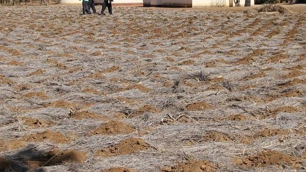 Argentina sufre la peor plaga de langostas de las últimas cinco décadas