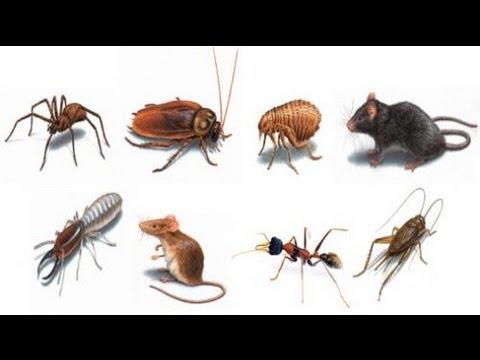 Avances en la eliminación de plagas de insectos