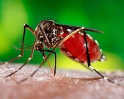 Puerto Rico podría estar al borde de un masivo brote de zika