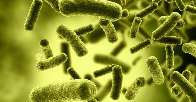 Enfermedades producidas por los hongos