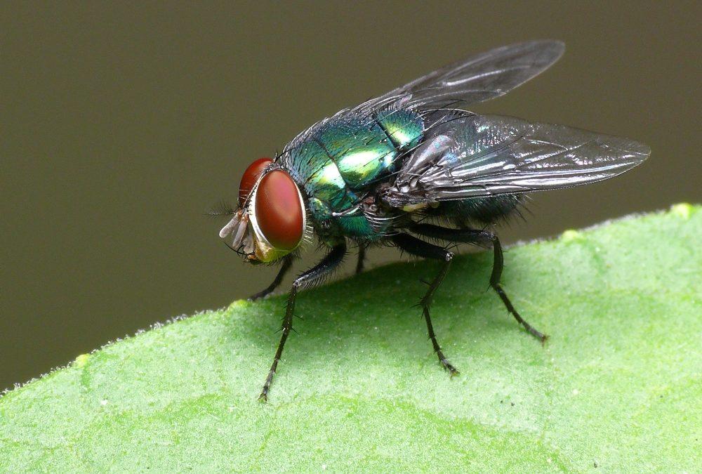 Medidas preventivas contra las moscas