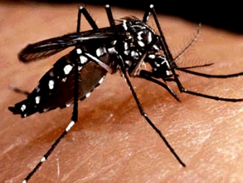 Confirman zika autóctono en la turística Miami Beach
