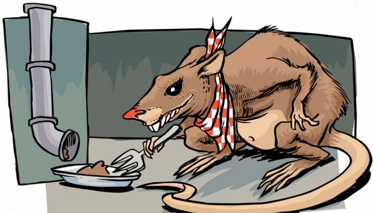 El PP avisa de una «plaga de ratas» en varios parques públicos y hasta en el Zoosanitario