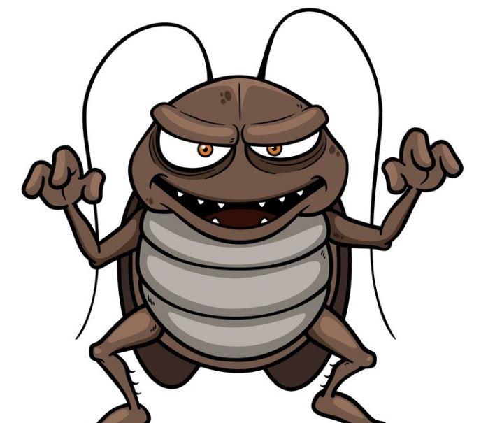 El calor, la humedad y las condiciones del suelo de la Región favorecen la aparición de cucarachas
