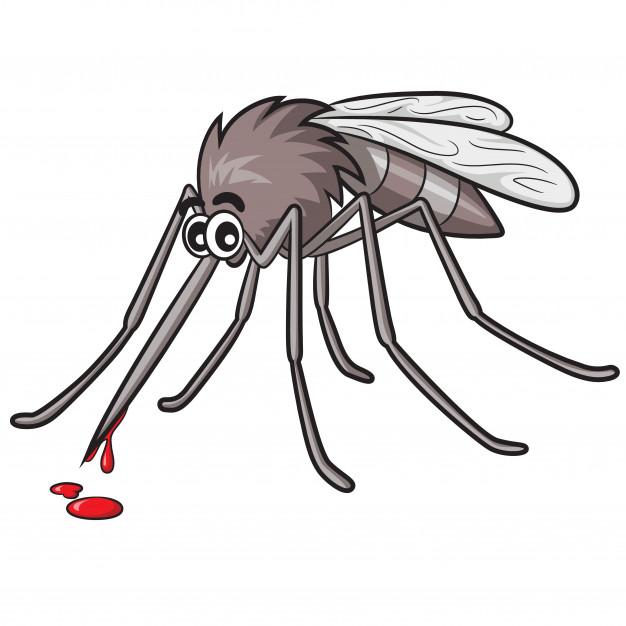 Una gran plaga de mosquitos hace la vida imposible a los vecinos de Elche