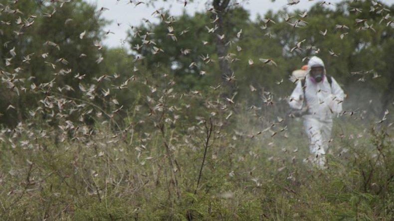 El Ayuntamiento despliega 93 acciones contra plagas al mes