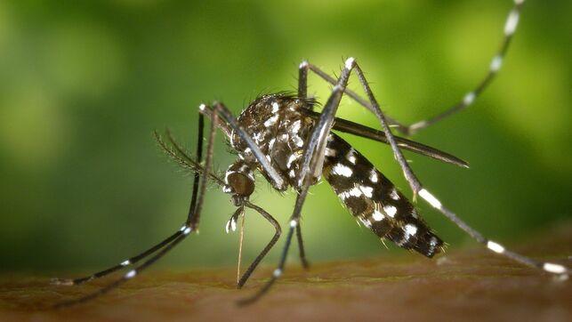 """Mosquito tigre: """"lo peor está por llegar"""""""